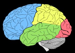 mózg, rehabilitacja pedagogiczna, neurorehabilitacja, Szczecin