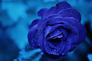 niebieska róża, neurorehabilitacja, rehabilitacja pedagogiczna