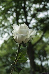 niebieska róża rehabilitacja pedagogiczna neurorehabilitacja